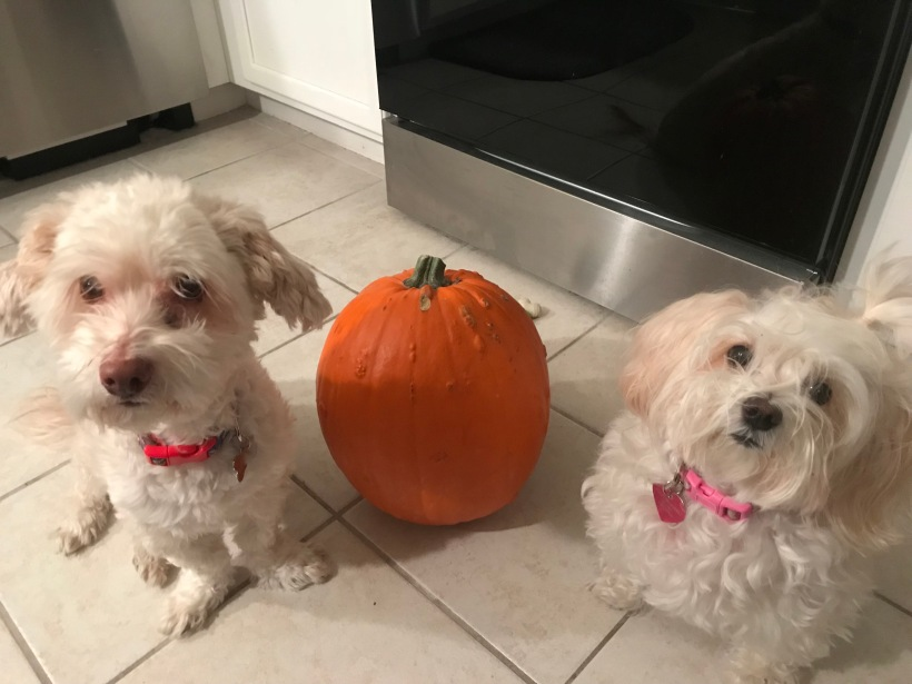 Dogs and Pumpkin