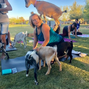 goat yoga instructor with goats