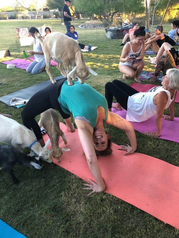 woman doing wheelbarrow yoga pose with goats